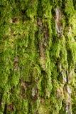 расшива покрыла зеленый вал мха Стоковая Фотография RF