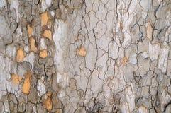 Расшива предпосылк-текстуры плоского дерева Стоковые Изображения