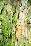 Расшива плоского дерева Стоковые Фото