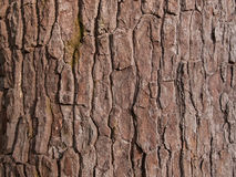 Расшива древесины Стоковое фото RF