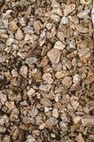 Расшива сосны солнечний свет дуба пущи конструкции граници предпосылки осени жолудей Стоковое Изображение