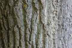 Расшива старого дерева Стоковая Фотография RF