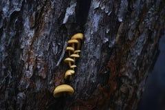 Расшива ствола дерева деревянная конца-вверх грибов желтого цвета дерева Стоковые Фото