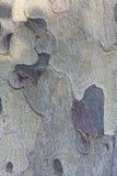 Расшива текстуры вала Стоковые Изображения