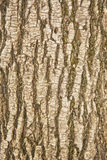 Расшива текстуры вала Стоковые Фото