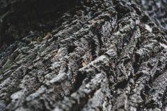 Расшива дуба Стоковая Фотография