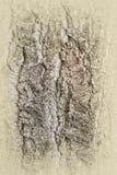 Расшива хлопока - текстура Стоковая Фотография RF