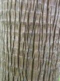 Расшива хобота сосны Стоковая Фотография RF