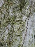 Расшива яблони, конца-вверх Стоковые Изображения
