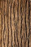 расшива Стоковое Изображение RF