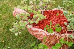Расшива mulch красная декоративная Стоковые Изображения RF
