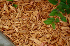 Расшива mulch оранжевая декоративная Стоковые Фотографии RF