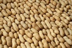 Расширение серии арахиса стоковое фото