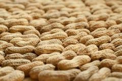 Расширение серии арахисов Стоковая Фотография RF