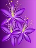 Расширьте цветок лилии Стоковое Изображение
