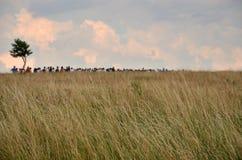 Расширять группу людей на горизонте Стоковые Фото