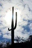 Ратники гигантского Saguaro, национального парка Saguaro Стоковая Фотография RF