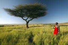 Ратник Masai около дерева акации слушая к музыке на iPod Яблоком в красном исследуя ландшафте охраны природы Lewa, Кении Африки Стоковое Изображение