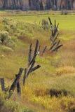 Рахитичный луг Fenceline Стоковая Фотография RF