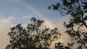 Радуга в небе между евкалиптом и деревом хвои видеоматериал