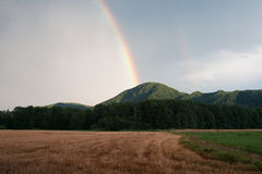 Радуга над зрелым пшеничным полем стоковое изображение rf