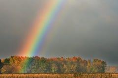 Радуга над кукурузным полем и деревьями Стоковые Изображения