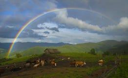 Радуга над фермой коровы Стоковые Фото