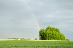Радуга после дождя над зеленым полем в лете Стоковая Фотография RF
