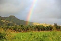 Радуга поднимая от плантации пальм Стоковые Изображения