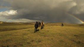Радуга скакать лошадь стоковые изображения rf