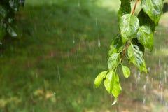 Радуга с дождем весной Стоковые Изображения RF