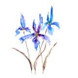Радужка Иллюстрация акварели цветка радужки Стоковое Изображение