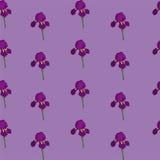 Радужка флористическая картина безшовная Текстура цветков Стоковое Изображение RF