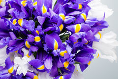 Радужка цветет предпосылка, patern весны флористическое Стоковая Фотография