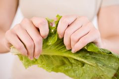 Рвать салат стоковое изображение rf