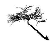 Реалистическая иллюстрация вектора силуэта дерева EPS10 Стоковые Фото