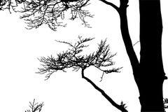 Реалистическая иллюстрация вектора силуэта дерева EPS10 Стоковое фото RF