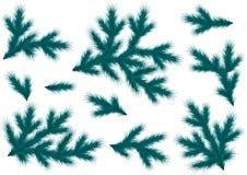 Реалистические голубые елевые ветви Установите для украшения летчика, знамени, заголовка, плаката для рождества и Нового Года иллюстрация штока