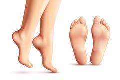 Реалистические женские установленные ноги иллюстрация штока