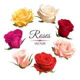 Реалистические розы цвета изолированные на белой предпосылке Стоковая Фотография