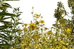Реалистические силуэты травы и цветков на белом ouette предпосылки от природы стоковое фото rf