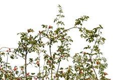 Реалистические силуэты травы и цветков на белом ouette предпосылки от природы стоковая фотография rf