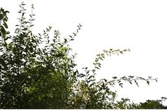 Реалистические силуэты травы и цветков на белом ouette предпосылки от природы стоковое фото