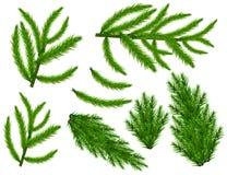 Реалистический комплект зеленых ветвей ели Ветви рождественской елки изолированные на белой предпосылке для поздравительной откры Стоковое Изображение RF
