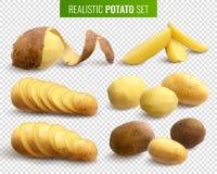 Реалистический комплект картошки иллюстрация штока