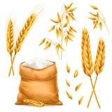 Реалистический пук пшеницы, овсов или ячменя при сумка муки изолированная на белой предпосылке Комплект вектора ушей пшеницы Стоковые Изображения RF