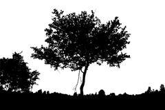 Реалистический силуэт дерева березы стоковые фото