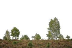Реалистический силуэт деревьев березы от природы стоковые изображения rf