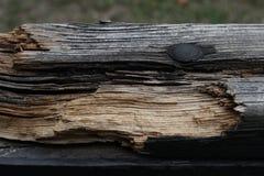 Реальная деревянная текстура предпосылки Деревянная предпосылка Красная естественная деревянная текстура Деревянная картина Реаль Стоковые Изображения