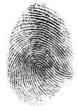 Реальная картина фингерпринта большого пальца руки изолировала Стоковое Изображение RF